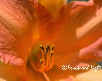 Bee's-Eye View Photo Download