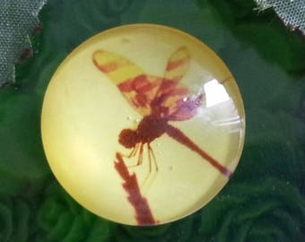 1 cabochon Dragonfly print glass cabochons, half round / dome, mixed color, 25 x 7 mm