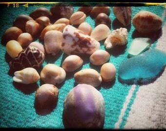Rare Seaglass and Authentic Maui Seashells