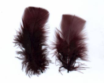 Brown down feathers