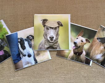Set of 5 greyhound greetings cards