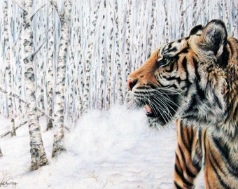 Tiger print, limited edition, hand signed fine art giclee print - 'In the Still of the Morning' Short listed for David Shepherd wildlife com