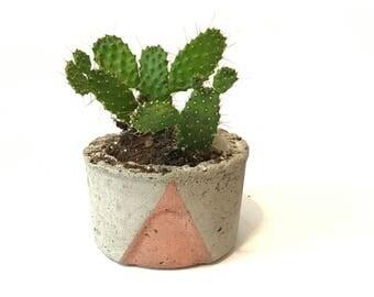 Small Round Concrete Pot with Succulent/Cactus