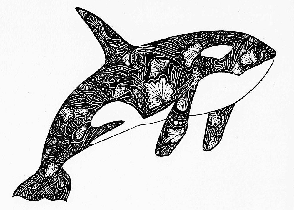 Orca Print Zentangle Orca Drawing Art Prints Black And