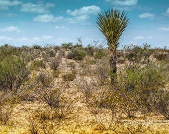 Desert Yucca Big Bend Texas , Landscape Photography, Home Decor, Wall Art, Texas,