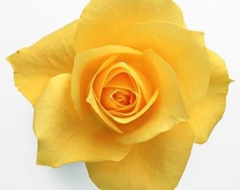 Yellow Rose Cross Stitch Pattern