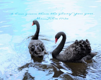 Two swans on rippled water