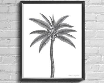 Palm Tree Print, Palm Tree Wall Art, Beach Print, Black and White Palm Tree Wall Art, Tropical Wall Art, Printable Palm Tree, Tropical Palm