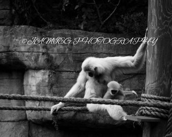 8x10 B&W Print of Gibbon and Her Baby