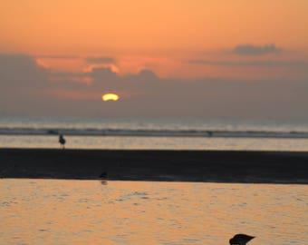 Shorebirds at Sunrise - Digital Download - Instant - Photography