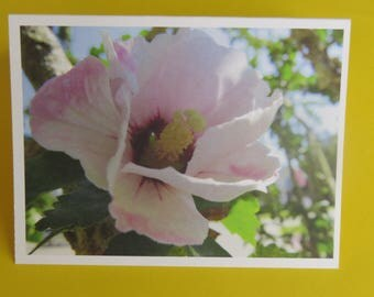 Flower Photography Card