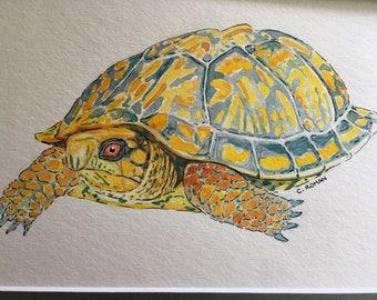 Box turtle watercolor