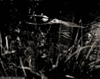 Marsh (Mature) - Fine art black and white photography print, female nude floating in water