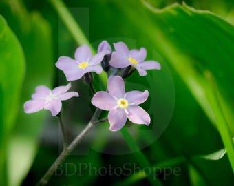 Tiny Purple Flowers | Macro Photo Art | Nature Lover Gift | Fine Art Photography | Personalization | BDPhotoShoppe | Home Office Decor