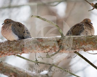Mourning Doves in the Snow | Bird Photo Art | Bird Lover Gift | Fine Art Photography | Personalization | BDPhotoShoppe | Home Office Decor