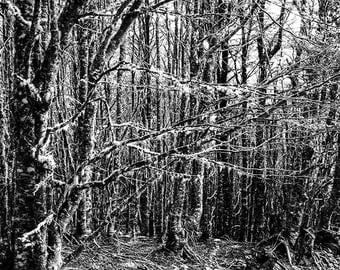 Home Decor//Tree Nature Print//Black and White Photography//Travel Print//Wall Decor//Gift