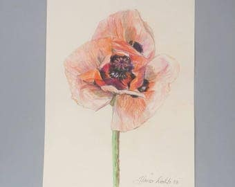 Red poppy flower drawing colored pencil drawing framed