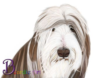 Hand-drawn Brown Bearded Collie greeting card, white background and also available with aqua/brown background.