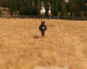 Poco the donkey in his field