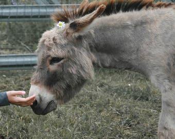 Touching the donkey