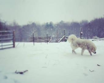 White Dog in snow