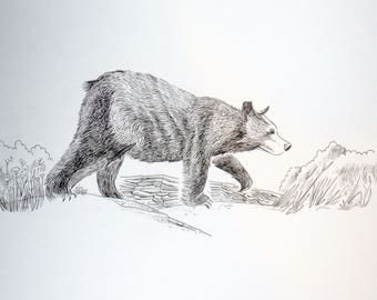 I saw a bear