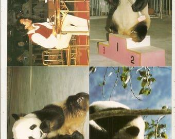 52 DIFF POSTCARDS China Pandas,Buildings, Scenes ETC....