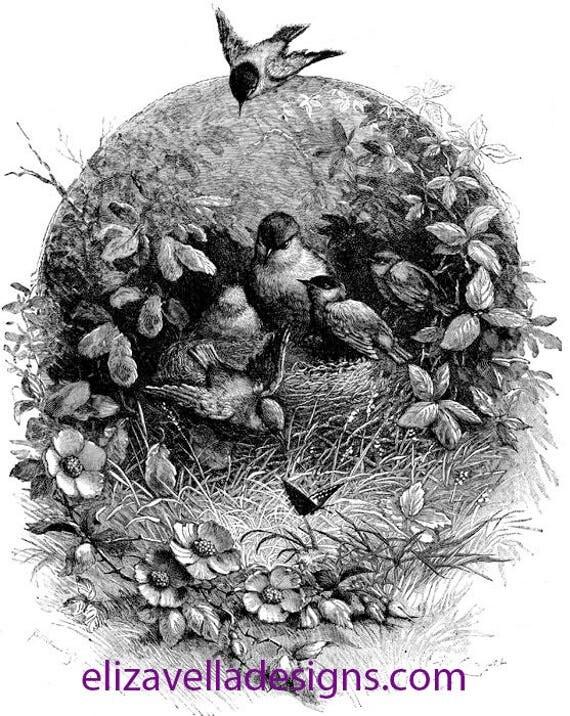 mama baby birds nest flower tree art printable clipart Digital Image Download graphics animals digital stamp digi stamp illustration vintage