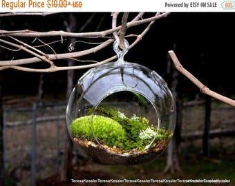 Save25% Hanging Glass Globe DIY Moss Terrarium Kit-Live Assorted Moss Lichens & Glass ball included-Wedding Decor