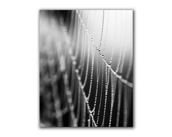 Abstract black and white wall art, minimalist decor, dew drops on spider web, water, beads, bokeh, fine art nature photography, greenpix