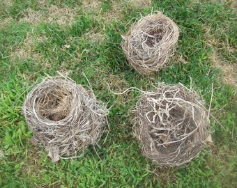 3 Natural Bird Nest Recovered From Wind Storms
