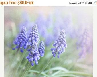 Purple Flower Photograph, Floral Photography, Purple Hyacinth Photograph, Cottage Chic Decor, Purple Wall Art, Large Canvas Art
