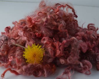 Leicester Longwool Lamb Fleece - Shades of Reds / 2 ounces