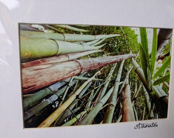 READY TO SHIP Garden Series matted photographs in a protective sleeve