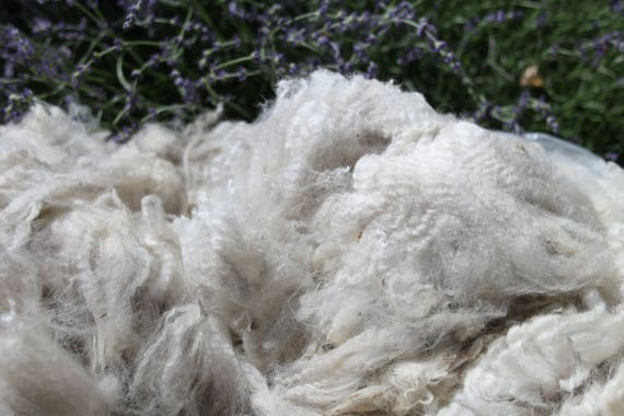"Alpaca Fleece- White- (Demi) Great for Dyeing, Spinning, Felting Nice crimp- little VM -  No Guard Hair 3"" Staple - 1.8 pounds"