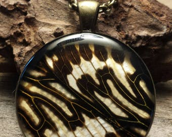 PhbeaD- Large Round Pendant with REAL CICADA WINGS: entomology jewelry, real insect jewelry, real wing jewelry, real butterfly wings