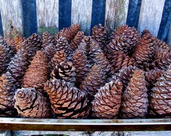 "Natural Pine Cones, 55 Pine Cones, 3"" - 4"" Natural Pine Cones, Pine Cone Decor, Pine Cone Craft, Pine Cone Wedding Decor"