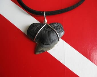 """Shark Tooth Necklace, Tiger Shark fossil, Venice-Florida, 20"""" Suede cord, Silver plated wire wrap"""