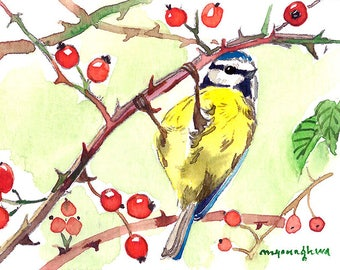 ACEO Limited Edition 1/25 - Blue tit in rose bushes, Bird Art print of an original ACEO watercolor painted by Anna Lee