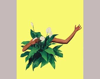 4x6 photo quality print - Preaching Peace Lillies