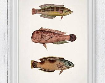Natural colors fishes. Sea life print- Vintage fishes art, Wall decor natural history illustration, Sea shore house decor, Sea SPA309