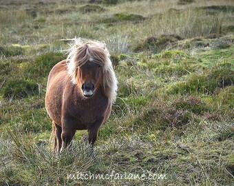 Horse photo, horse wall art, pony photo, equine art, shetland pony photo, horse decor, horse art, equestrian decor, equine photography