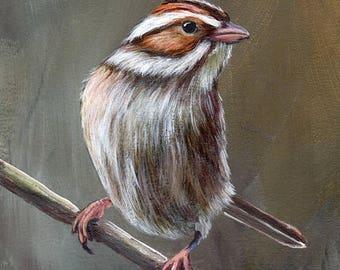SALE Bird Art Painting Clay Coloured Sparrow SFA Wildlife Original hand painted bird acrylic painting by Australian Artist Janet M Graham