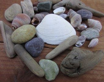 Assorted Shells, Driftwood, and Pebbles for Natural Crafts and Decorating, Buy 4 Get 1 Free!