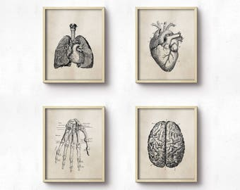 Anatomy Art Prints - Office Art - Medical Student Graduation Gift - Set Of Four - Science - Doctor's Office Decor - Brown Neutral - SKU:8924