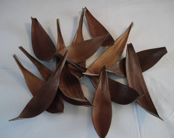 Set of 13 MARIPA shell or boat coconut - set 1