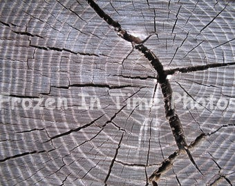 Tree rings photo. Instant Download.