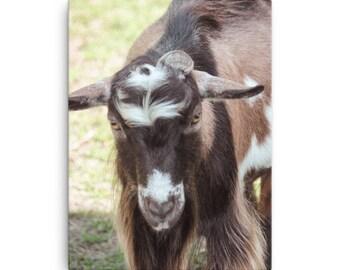 Canvas - Red Silo Original Art - Billy Goat Gruff