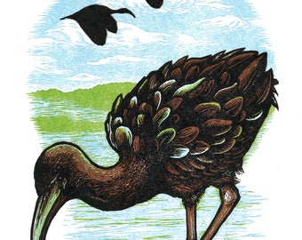 Glossy Ibis Linocut Letterpress Print // Original Art/Signed/Numbered // Bird Art Natural History Illustration Nature Block Print