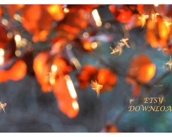 Fairies at Dusk. FINE ART Photography, Macro photography. Digital Photo, Instant Download Printable fine art, Home Decor 300 dpi 11 x 7.